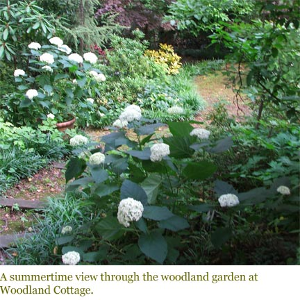 A summertime view through the woodland garden at Woodland Cottage