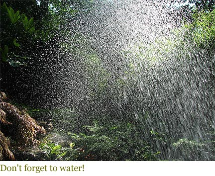 Don't forget to water!